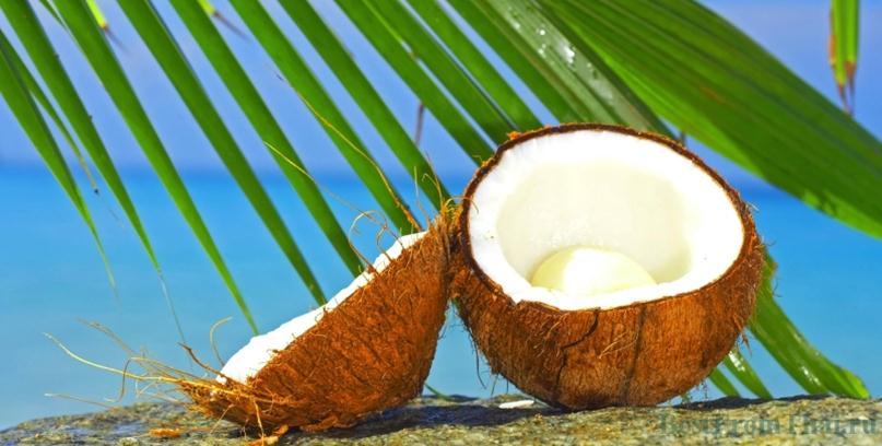 Плод кокосовой пальмы