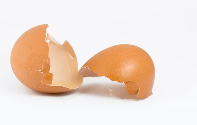 Яичная оболочка